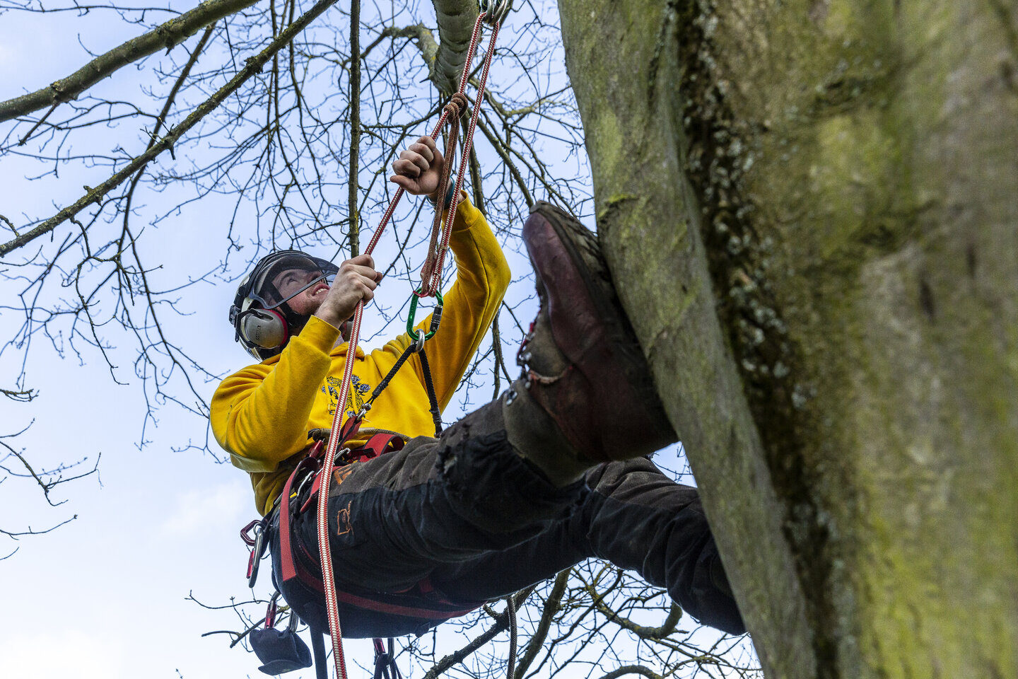 Arboriculture and Forestry student Shuttleworth College