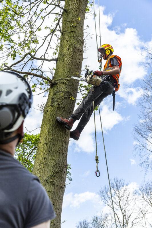 Arboriculture student Shuttleworth College practical lesson