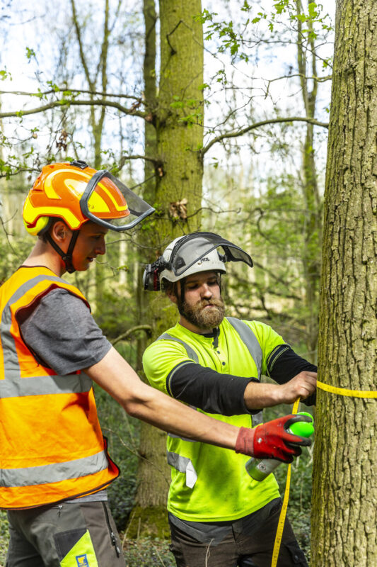 Arboriculture and Forestry Shuttleworth College student and tutor
