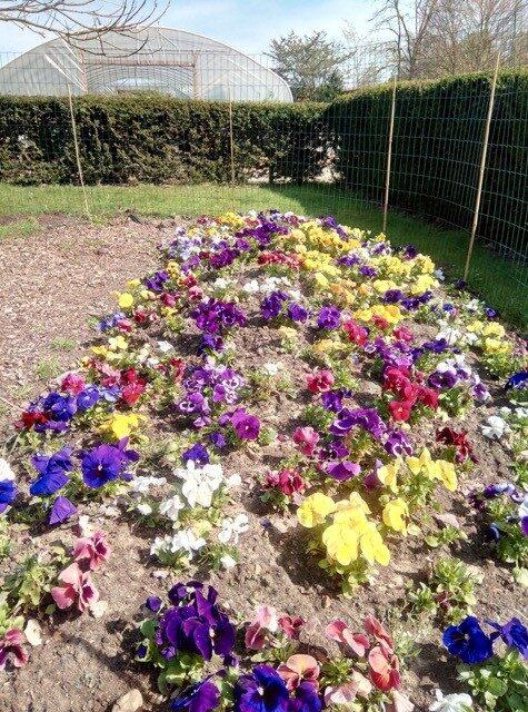 Shuttleworth College Old Warden Park flowers